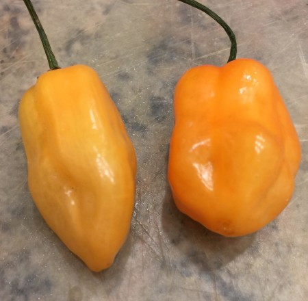 Scott Bonnet peppers